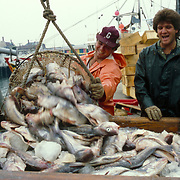 Fishermen at Boston's Fish Pier unload the day's catch