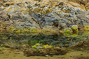 Oceanside, Oregon.  Low Tide - Pool, Barnacles, and Sea Grass