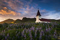 Famed church and lupine fields at sunset in Vik, Iceland