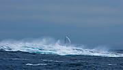 Off Tasman Island<br /> ROSEBUD<br /> Sail Number: US60065<br /> Owner: Roger Sturgeon<br /> Division: IRC<br /> Design: Transpac 65<br /> <br /> 2007 Rolex Sydney Hobart Yacht Race<br /> © ROLEX / Daniel Forster