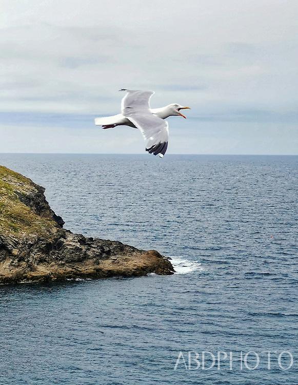 Cornwall, England, UK Port Isaac,