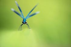 Wildlife in Miniature