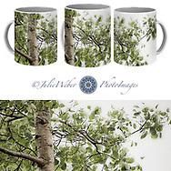 Coffee Mug Showcase 62 -  Shop here:    - Shop here: https://2-julie-weber.pixels.com/products/2-rainy-day-birch-julie-weber-coffee-mug.html