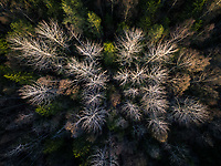 Aerial view of a forest during fall season in Estonia.