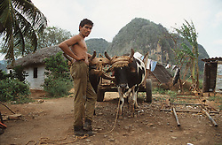 Man standing with ox cart on small farm near Vinales; Cuba,