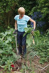 Gardener clearing dock weeds from weedy garden