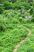 An old cemetery overrun with foliage in Halawa Valley on Molokai.