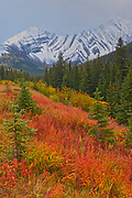 Autumn colors  in the Canadian Rocky Mountains at Highwood Pass<br />Kananaskis Country<br />Alberta<br />Canada