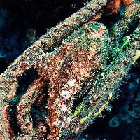 Frogfish Port Side, Carthaginian, Maui Hawaii