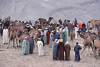 Maroc, Moussem des fiancée à Imilchil // Annual souk of cattle, Berbere market, Moussem of fiancée, Berbere tribe of Aït Hdiddou, Village of Imilchil, Atlas moutain, Morocco