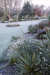 Frosty winter's morning in John Massey's garden. Curved bench seats around three birch trees - Betula nigra 'Heritage'