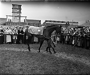 """08/03/1958<br /> 03/08/1958<br /> 08 March 1958<br /> Grand National entries at the Leopardstown Races. """"Richardstown"""" owned by Mr. J. Neville."""
