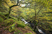 Tree branches form an intriguing autumnal arch over the flowing waters of Burbage Brook in Padley Gorge. Autumn in Derbyshire, Peak District, England, UK. October 2014.