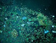 Plastic afval in het water | Plastic waste in water