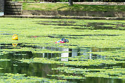 (c) Licensed to London News Pictures. 13/06/2014. Essex, UK. Southchurch Park, Southend on Sea. The boating lake favoured by model boat enthusiasts has been blighted by a green algae invasion. The local Unitary Authority of Southend are carrying out tests on it. It is believed to be sea Lettuce. Plans are afoot to ride the lake of this growth. A radio controlled hovercraft stuck in the middle caught up in the weed.Photo credit Simon Ford/LNP