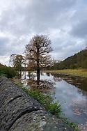 Flooded tree near River Derwent, Milford, Derbyshire