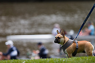 A dog is seen on The Yarra banks as students are seen rowing in the background during the COVID-19 in Melbourne. With over a week of zero cases in Victoria, Premier Daniel Andrews is expected to make major announcements on Sunday about further easing of restrictions. (Photo by Dave Hewison/Speed Media)