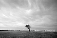 Tree in the Nebraska Sandhills...Photo by Chris Machian