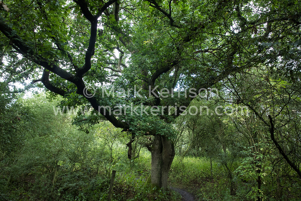 A path winds past a tree at Calvert Jubilee Nature Reserve on 27 July 2020 in Calvert, United Kingdom. On 22nd July, the Berks, Bucks and Oxon Wildlife Trust (BBOWT) reported that it had been informed of HS2's intention to take possession of part of Calvert Jubilee nature reserve, which is home to bittern, breeding tern and some of the UK's rarest butterflies, on 28th July to undertake unspecified clearance works in connection with the high-speed rail link.