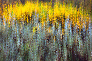 Fall Colors near Seeley Lake, Montana.