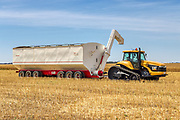 tractor and grain trailor during harvest <br /> <br /> Editions:- Open Edition Print / Stock Image
