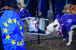 """© Licensed to London News Pictures. 10/03/2019. LONDON, UK. A dog at a Jacob Rees-Mogg pee station in Victoria Park Gardens, next to the Houses of Parliament, for """"Brexit is a Dog's Dinner"""", a protest to urge MPs to vote to ensure that a no-deal Brexit is avoided and to give the people of the UK a final say.  Next week, there will be a series of up to three votes in the House of Commons where MPs will vote on whether to accept Theresa May's Brexit deal.  Photo credit: Stephen Chung/LNP"""