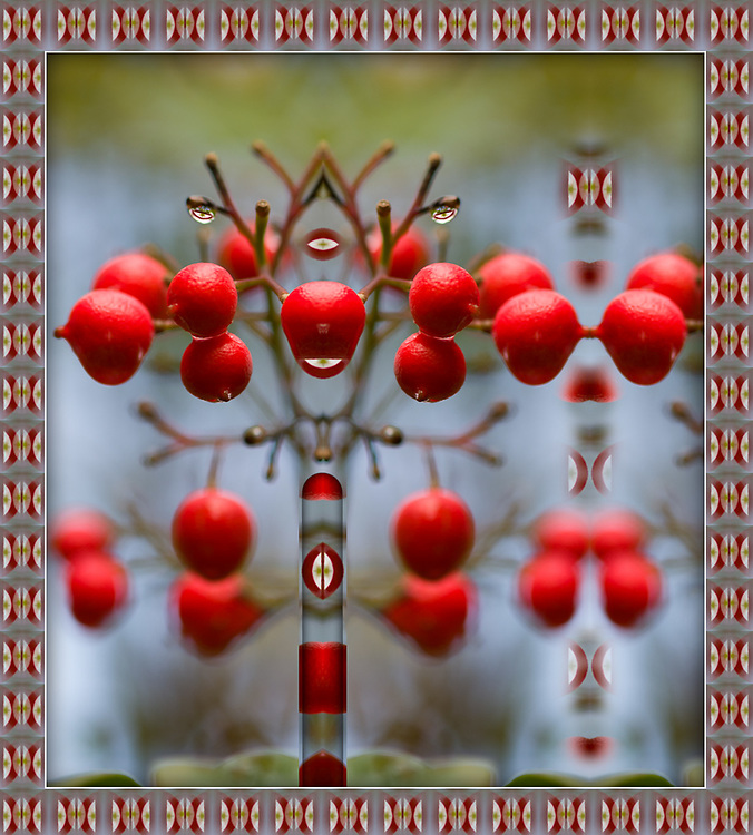"""""""Berry Red Stallion"""", derivative image from a photo of pyracantha berries with rain droplets, overcast light, December, Contra Costa County, California, USA"""