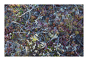 sub alpine floor covered in lichens, twigs, mosses and small flowers