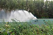Nederland, the netherlands, Bredevoort, 28-8-2019Een boer beregent zijn akker nat dmv een waterkanon. Het water wordt uit een put in de grond opgepompt en is dus grondwater. Foto: Flip Franssen