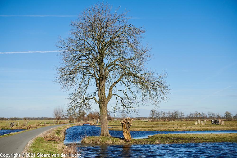 De polder van de Krimpenerwaard, Zuid-Holland. | The dutch polder in the area of the Krimpenerwaard, South Holland