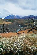 Parque Nacional Torres Del Paine, Patagonia, Chile<br />