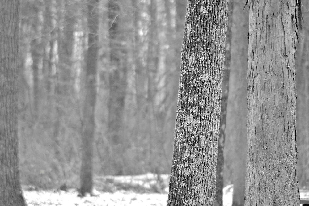Ohio Winter