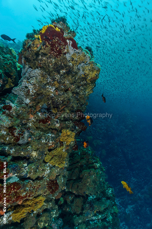 Colorful coldwater reef, Isabela Island, Galapagos National Park