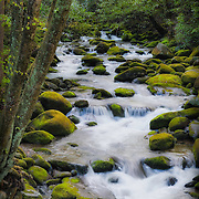 View of the Roaring Fork mountain stream with spring green foliage.  Accessed via the Roaring Fork Motor Nature Trail.  Great Smoky Mountain National Park near Gatlinburg, Tennessee, USA.