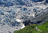 A mountain goat standing at the edge of Exit Glacier, Kinai Fjord National Park