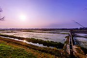 Rice Field Sunset in Hoi An