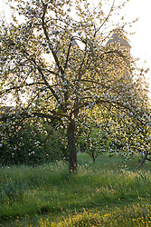 View from the Orchard towards the Tower at Sissinghurst Castle Garden