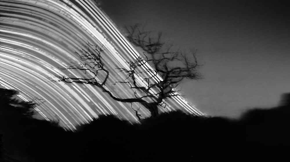 """Skeleton tree; Lake Ellesmere.<br /> 2016 (6 months pinhole exposure).<br /> 140mm x 250mm (image size).<br /> Pigment ink on paper.<br /> Editions of 5. First shown at the exhibition """"Art for Art"""" at the Christchurch Art Gallery Te Puna o Waiwhetū (2017)."""