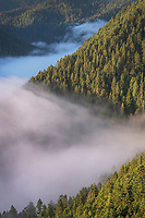 Fog in valley and slopes of Olympic Mountains. Olympic National Park Washington