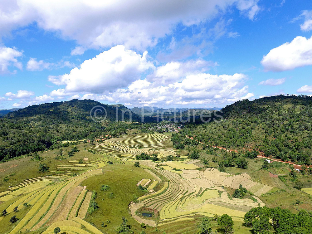 Aerial view of the rice fields at harvest time around Panpet village, Kayah State, Myanmar on 14th November 2016