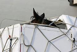 Donnerfee of Claudia Fassaert<br /> Departure of the horses from Liege Airport to Lexington<br /> Alltech FEI World Equestrian Games - Kentucky 2010<br /> © Dirk Caremans