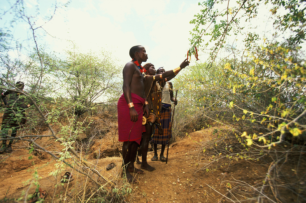 A Hamar bride-to-be takes of her fiancé's bark headband and hangs it in a tree during the couple's betrothal ceremony, in South Omo, Ethiopia. The ceremony is supervised by the young man's uncle. The 40,000-strong, cattle-herding Hamar are among the largest of the 20 or so ethnic groups which inhabit the culturally diverse South Omo region in south-west Ethiopia.
