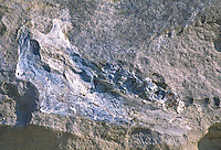 This large boulder was retrieved during the construction of the Hilltop Point boat ramp at North Sterling Reservoir State Park.  The boulder contains the fossilized jawbone of an archaic mammal that once roamed the Colorado plains.
