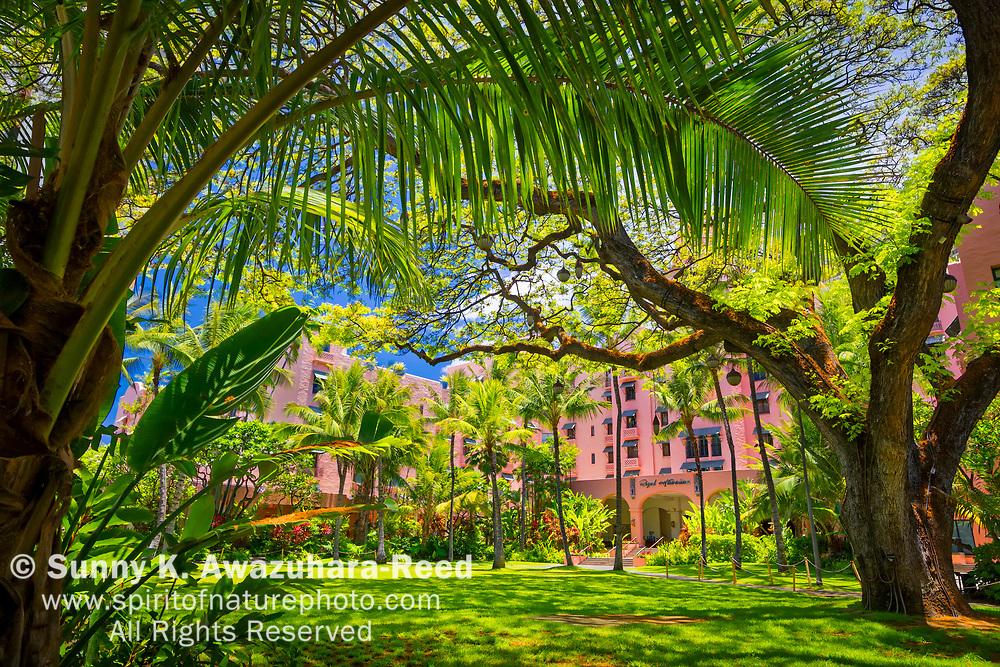 """Tropical green courtyard, """"Coconut Grove"""", Historic Royal Hawaiian Resort, Waikiki, Honolulu, Oahu, Hawaii."""