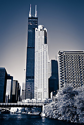 Chicago Cityscape with Willis Tower (Sears Tower) in the South Loop along the Chicago River. Photo is black and white blue toned, vertical orientation and high resolution.