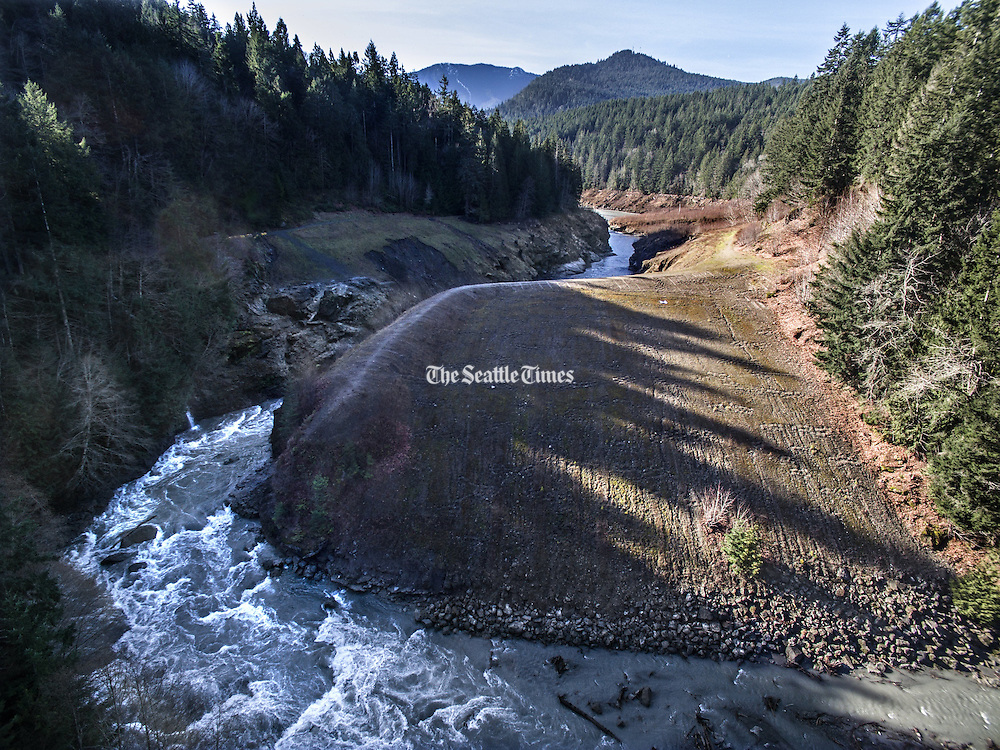 Aerial view looking up the Elwha River that was blocked by the Lower Elwha Dam (the dirt berm) creating Lake Aldwell.  The river now flows naturally from the Olympic Mountains in the distance. (Steve Ringman / The Seattle Times)