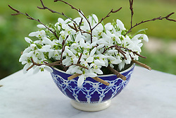 Arrangement of snowdrops in a moroccan bowl using noughts and crosses grid. Galanthus nivalis