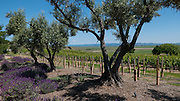 Rams Gate Winery, Sonoma, California