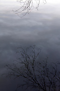 tree twig reflection on water with clouds