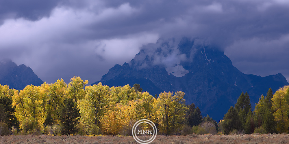 The fall sun hits a group of trees as a storm clears off of Mount Moran in Teton National Park.